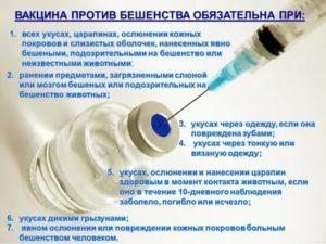 Нужно ли делать прививки от бешенства и столбняка?