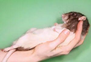 Могла ли меня поцарапать мышь во сне?