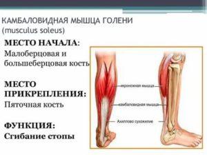 Как лечить растяжение камбаловидной мышцы?