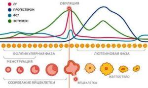 Влияет ли флебодиа на менструальный цикл?