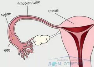 Возможна ли беременность от петтинга?