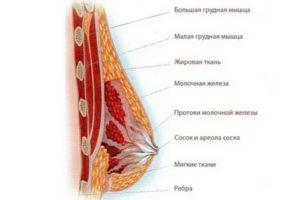 Набухла и болит грудь