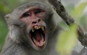Укусила обезьяна, надо ли беспокоиться?