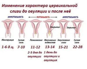 Выделения на 17 день цикла