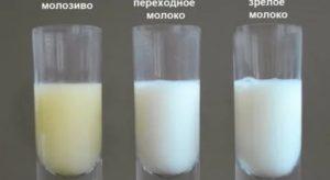 Желтое кислое молоко при сцеживании