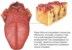 Бугорки на корне языка