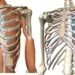 Задержка, болит грудь, тест отрицательный